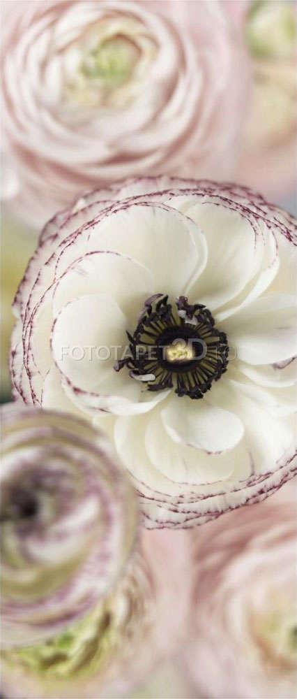 Fototapet Floral 2-1884-1