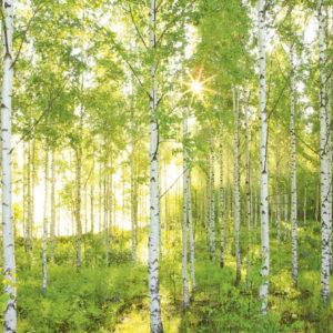 Fototapet Padure Copaci Soare 8-519
