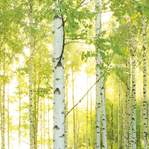 Fototapet Padure Copaci Soare 8-519 Detaliu