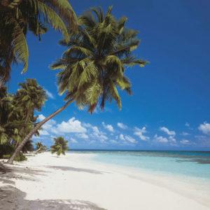 FOTOTAPET MALDIVE 8-240