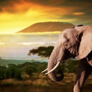 Tapet Foto Elefant 02