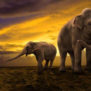 Fototapet 3D Elefant 04