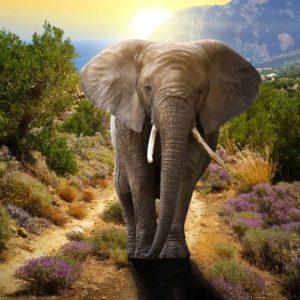 Elefant 06 - Fototapet