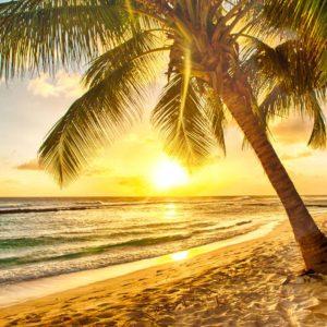 Fototapet Peisaj Tropical 20