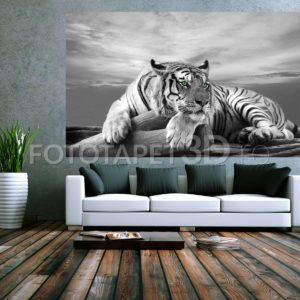 Fototapet Tigru