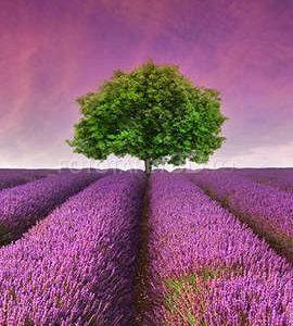 Fototapet Flori si Plante