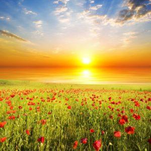 Tapet Campii si Dealuri - Rasarit de soare
