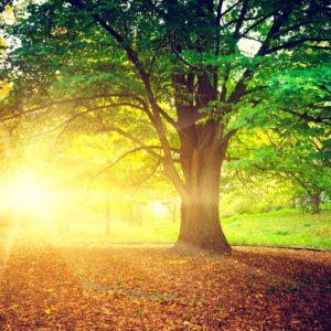 Tapet Foto Copaci Razele Soarelui