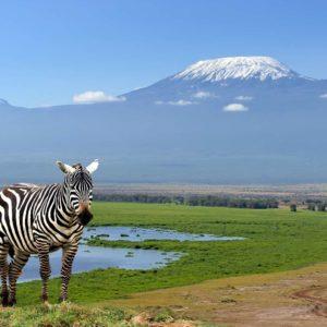 Fototapet Zebra 02 - Animale, Natura, Peisaj Montan
