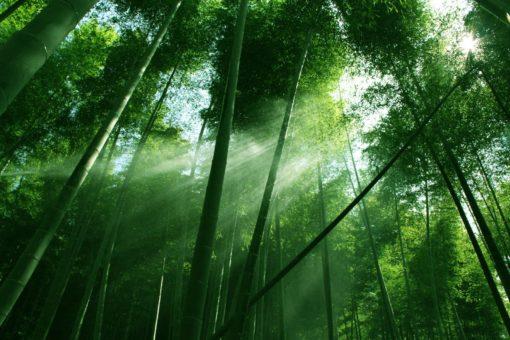 Fototapet Padure Copaci Cer Razele soarelui - Fox-01-0222