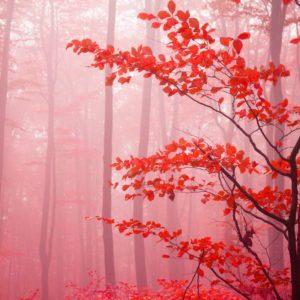 Padure Copaci Flori Ceata Fototapet Fox-01-0243