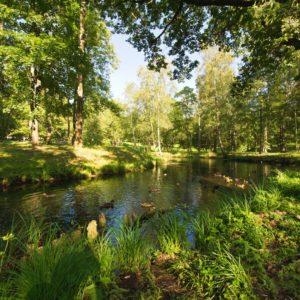 Tapet Foto Lac Pădure Copaci