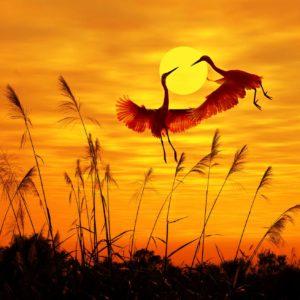 Fototapet Pasari Apus Soare - Animale, Natura