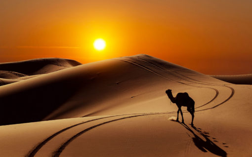 Fototapet Apus in Desert Camila 01