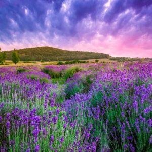 Fototapet Peisaj Floral Flori 09 - Natura