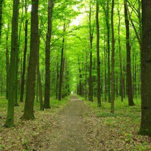 Fototapet Natura Padure Copaci Carare 01-0297