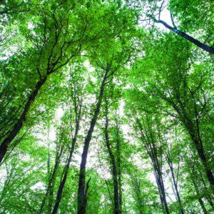 Fototapet Foz-01-0298 Padure Copaci Cer