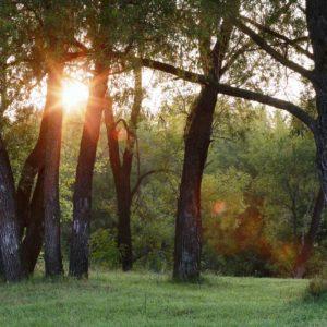 Fototapet Fox-01-0299 Soare Padure Copaci