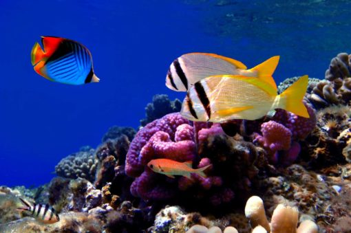 Fototapet Subacvatic Lac Tropical Pesti Corali Acvariu fox-18-0118