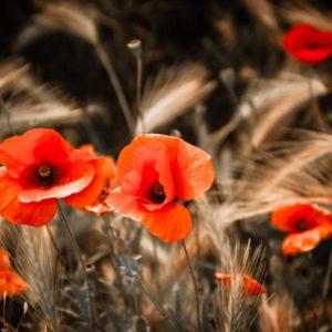 Fototapet Maci 13 Flori si Plante