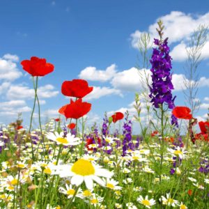 Fototapet Maci 15 Cer Nori Flori si Plante