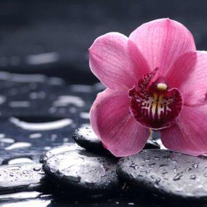 Fototapet Orhidee 01 Pietre Feng Shui