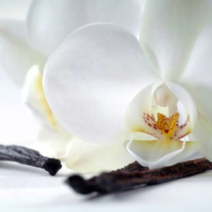 Orhide 02 - Fototapet Floare Alba Detaliu Macro