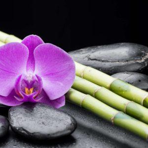 Orhidee 07 - Fototapet Floare Mov Pietre Bambus Feng Shui