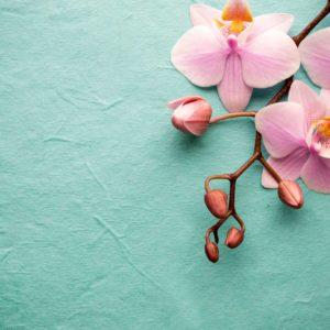 Fototapet Orhidee 11 - Flori Roz, Minimalist