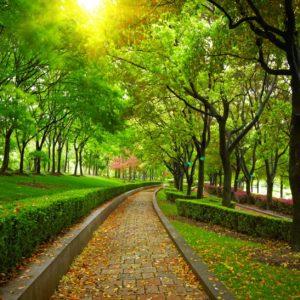 Parc 09 - Tapet Foto Carare