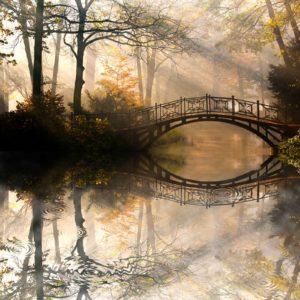 Parc 15 - Fototapet Lac Pod Copaci Raze de soare