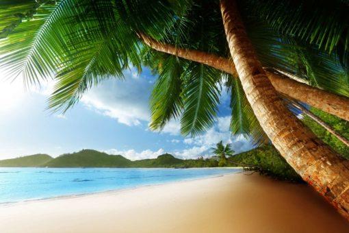 Peisaj Tropical 03 - Fototapet Palmieri Plaja
