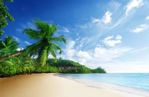 Peisaj Tropical 08 - Fototapet Plaja Palmieri