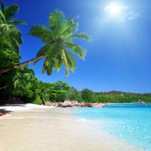 Peisaj Tropical 11 - Tapet 3D palmieri, plaja, soare