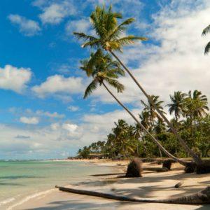 Peisaj Tropical 14 - Tapet Foto 3D Plaja Palmieri