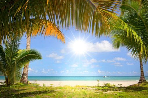 Peisaj Tropical 17 - Fototapet Plaja Palmieri