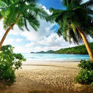 Fototapet Peisaj Tropical 18 - Plaja si Palmieri