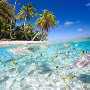 Peisaj Tropical 22 - Tapet Palmieri, Plaja, Lac