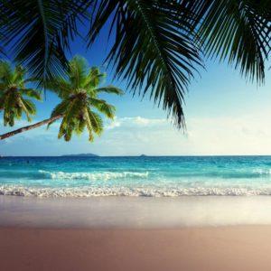 Peisaj Tropical 23 - Tapet Foto Palmieri Plaja