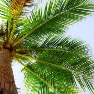 Peisaj Tropical 29 - Tapet 3D Palmier