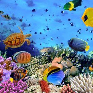 Fototapet Subacvatic Pesti Tropical Aquarium Corali Lac