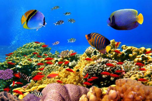 Fototapet Tropical Subacvatic 03 - Pesti, Corali, Lac