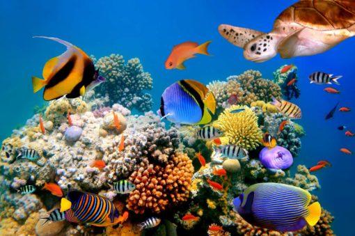 Fototapet Subacvatic 04 Tropical - Pesti, Testoasa, Corali, Lac, Acvariu