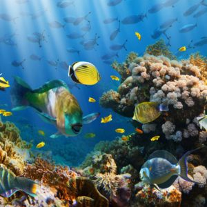 Fototapet Tropical Subacvatic 06 - Pesti colorati, corali, soare, apa, lac