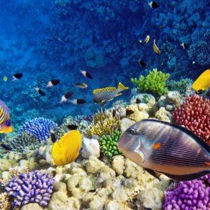 Subacvatic 10 - Fototapet Pesti Tropicali, Corali, Plante tropicale, Apa, Lac