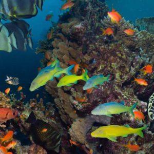 Subacvatic 11 - Fototapet Pesti Tropicali, Testoasa, Plante, Corali, Acvariu