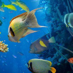 Subacvatic 12 - Fototapet Pesti Tropicali, Acvariu, Corali, Plante, Lac, Apa