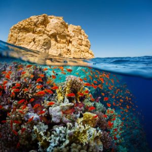 Fototapet Subacvatic 13 - Corali, Pesti, Apa, Lac