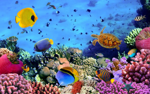 Subacvatic 15 - Fototapet Pesti Acvariu Lac Tropical Testoasa Corali Plante