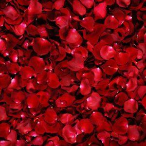 Fototapet Trandafir 13 - Trandafiri Rosii
